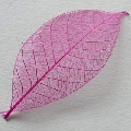 Skeleton Leaves fuchsia