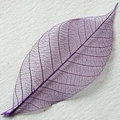 Skeleton Leaves purper