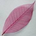 Skeleton Leaves groot formaat magenta